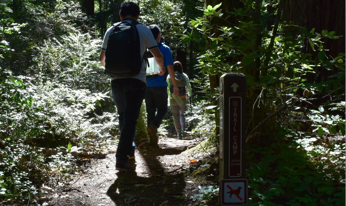 portola redwoods state park3