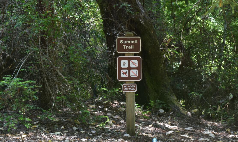 portola redwoods state park32