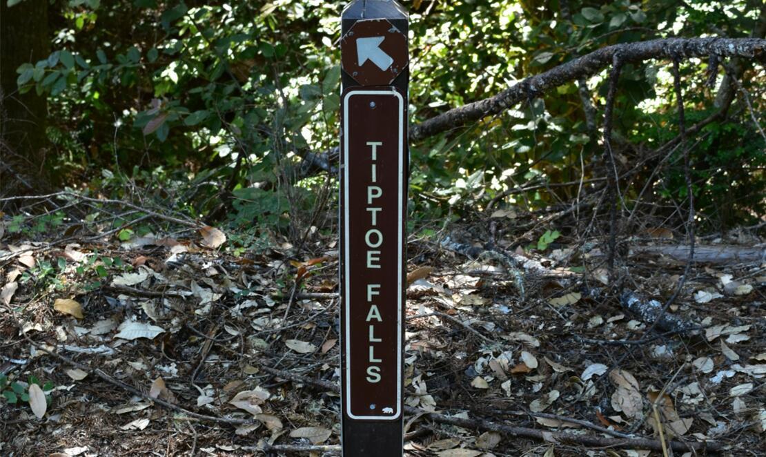 portola redwoods state park33