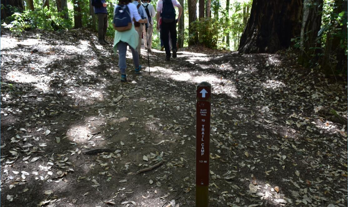 portola redwoods state park6