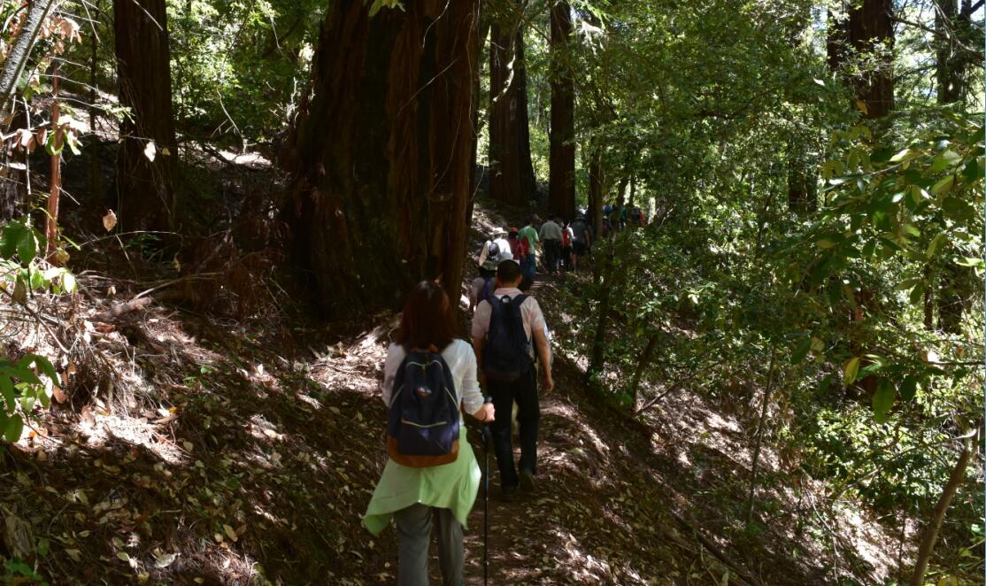 portola redwoods state park7