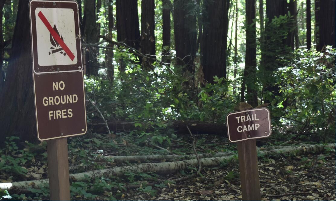 portola redwoods state park9