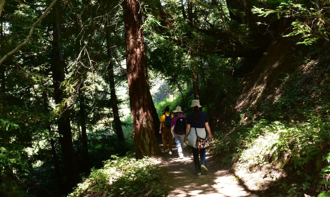 purisima creek redwoods_11