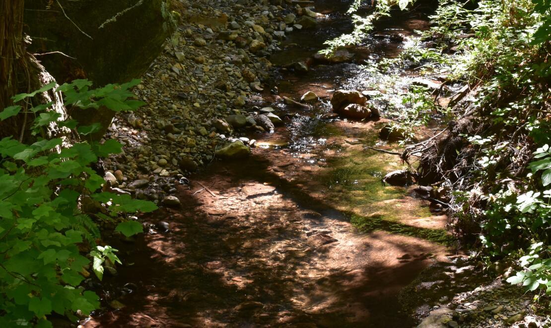 purisima creek redwoods_14