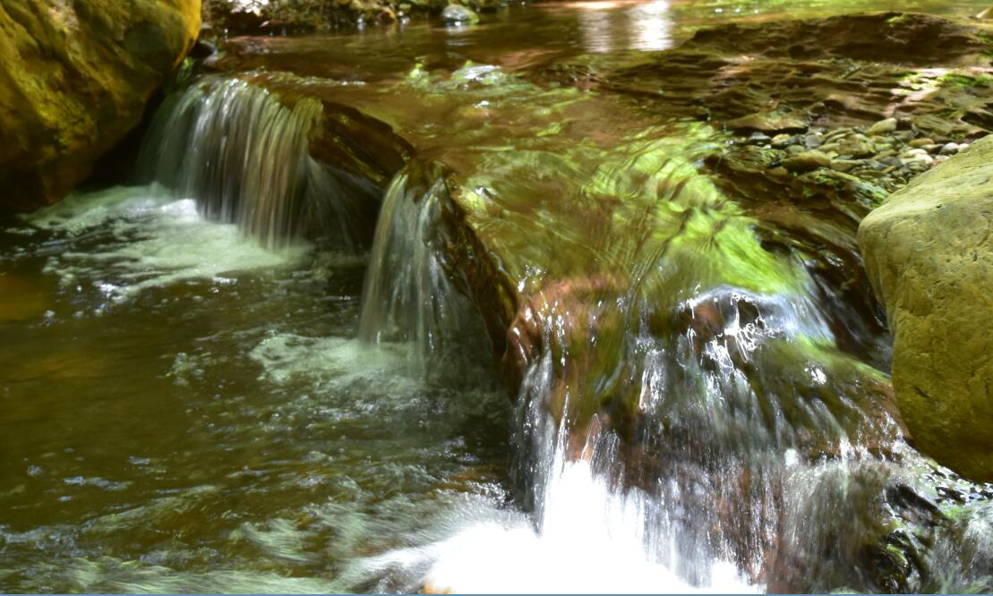 purisima creek redwoods_17