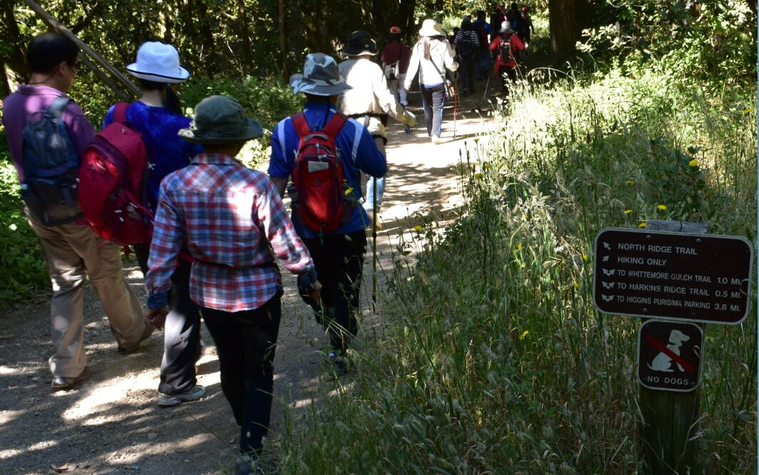 purisima creek redwoods_2