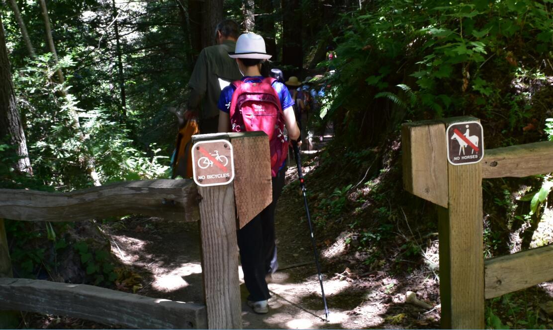 purisima creek redwoods_21