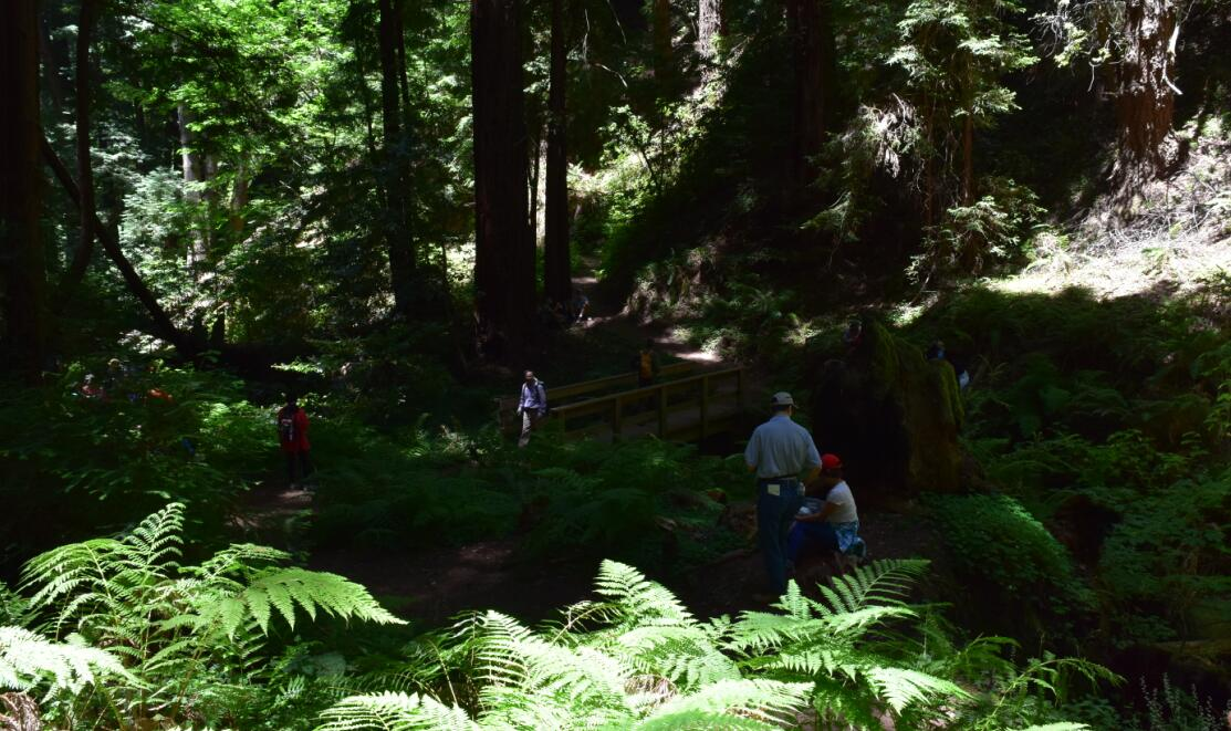 purisima creek redwoods_22