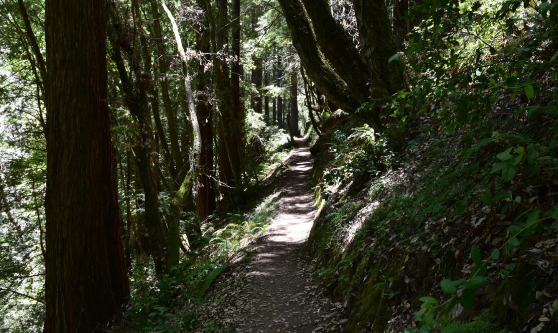 purisima creek redwoods_24