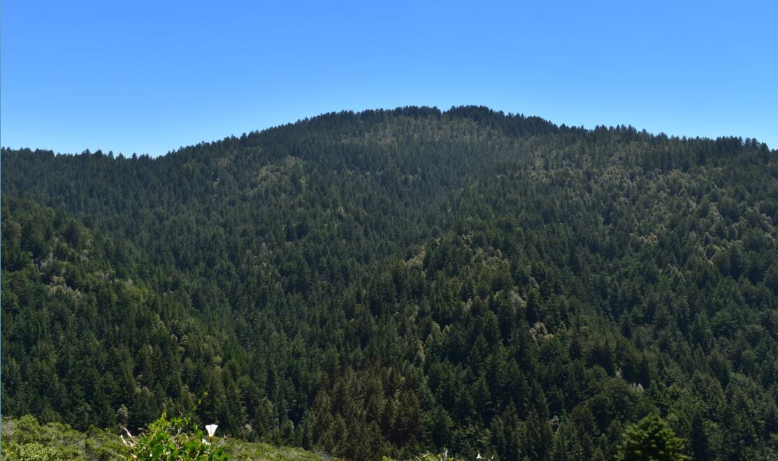 purisima creek redwoods_25