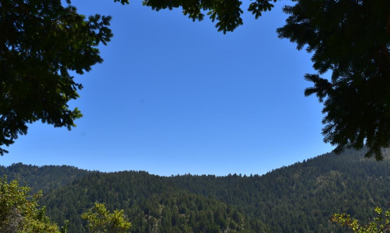 purisima creek redwoods_26