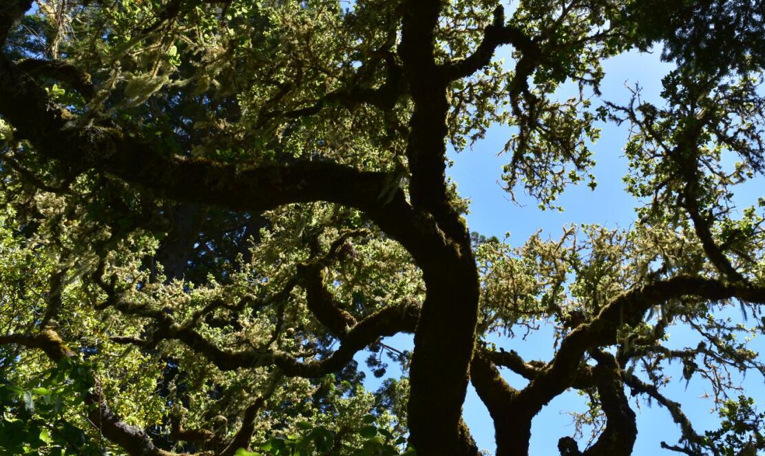 purisima creek redwoods_27