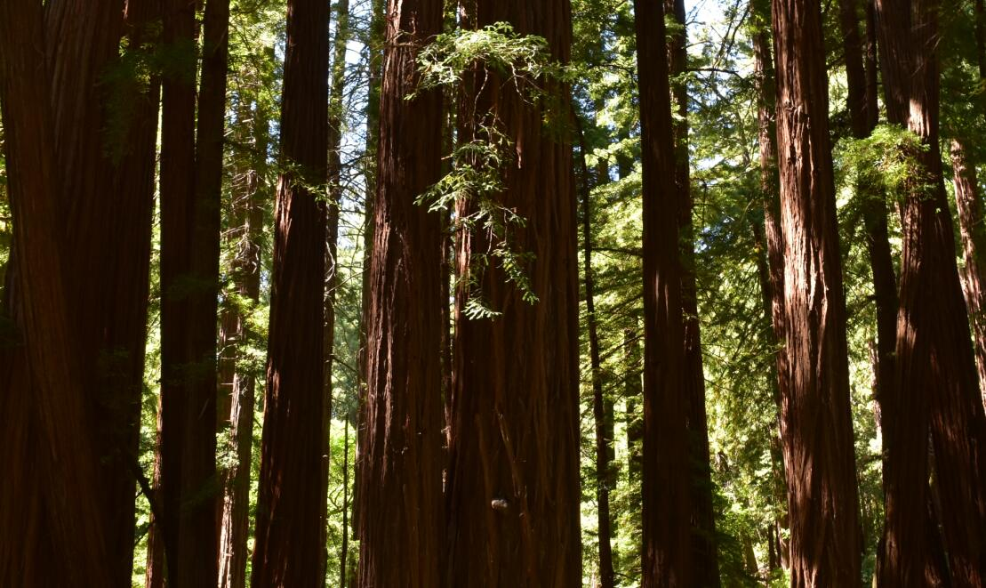 muir woods national monument42_0