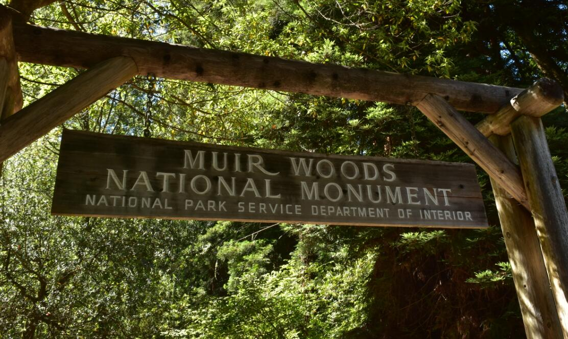 muir woods national monument49