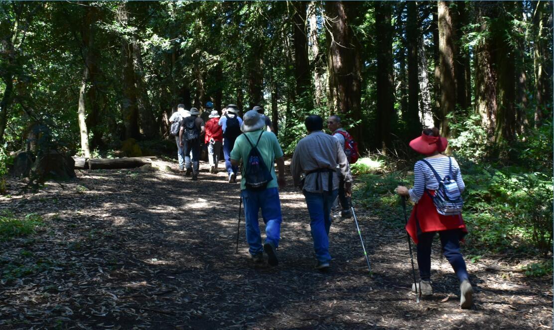 redwood regional park10