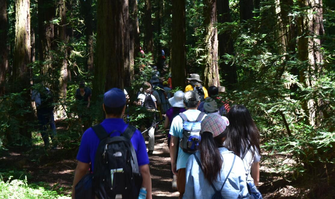redwood regional park11