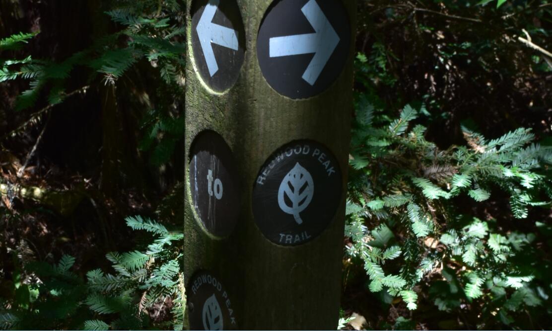 redwood regional park16