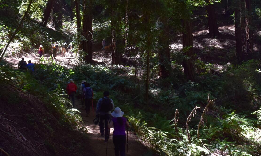 redwood regional park20