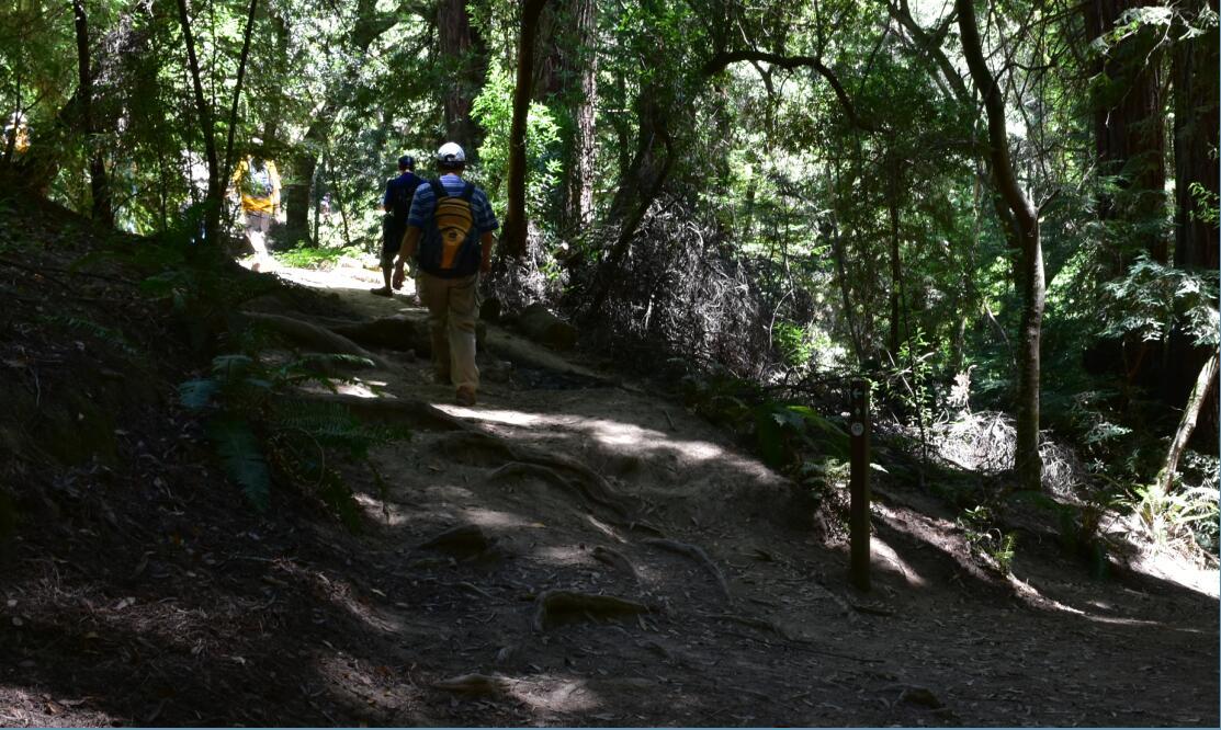 redwood regional park23