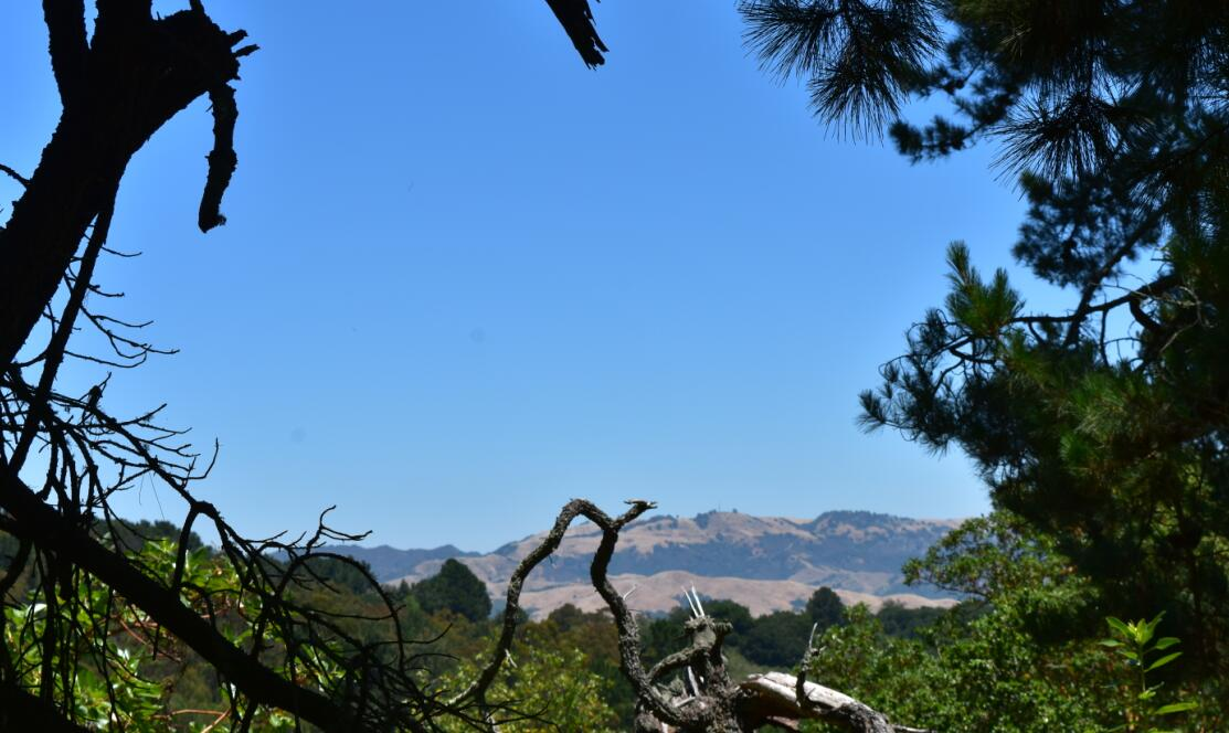 redwood regional park24