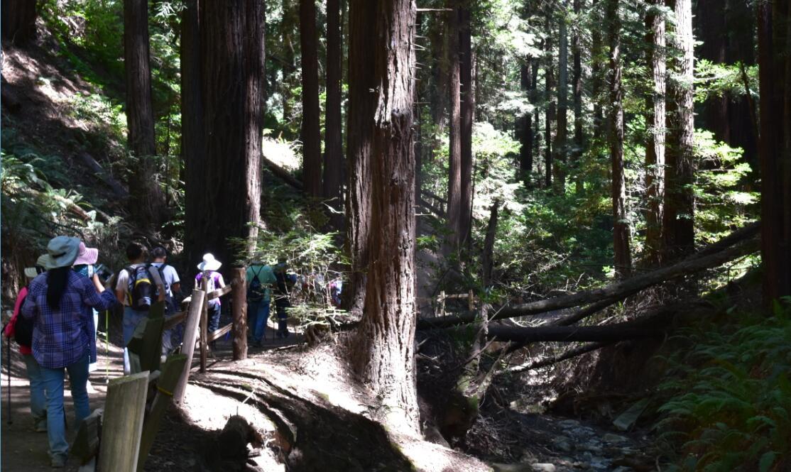 redwood regional park34