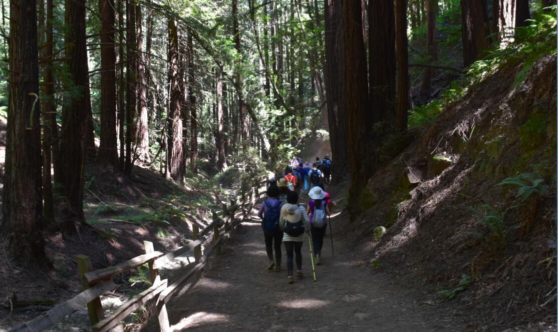 redwood regional park35