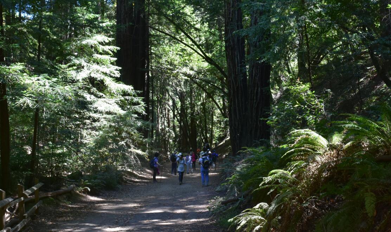 redwood regional park39
