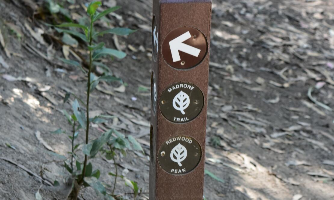 redwood regional park9