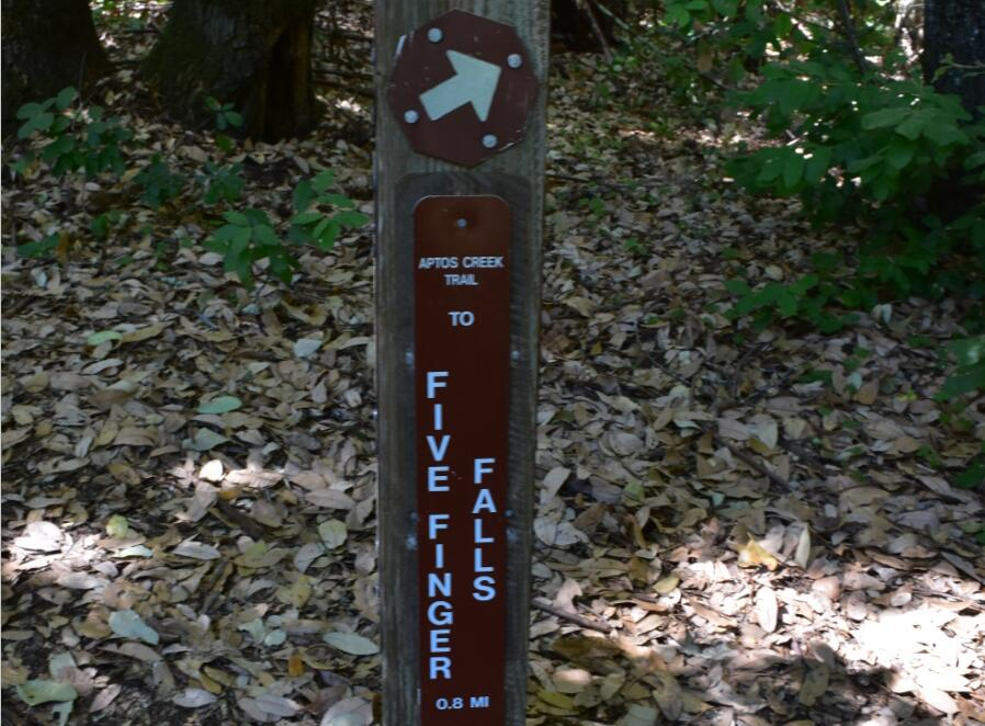 the-forest-of-nisene-marks-state-park31