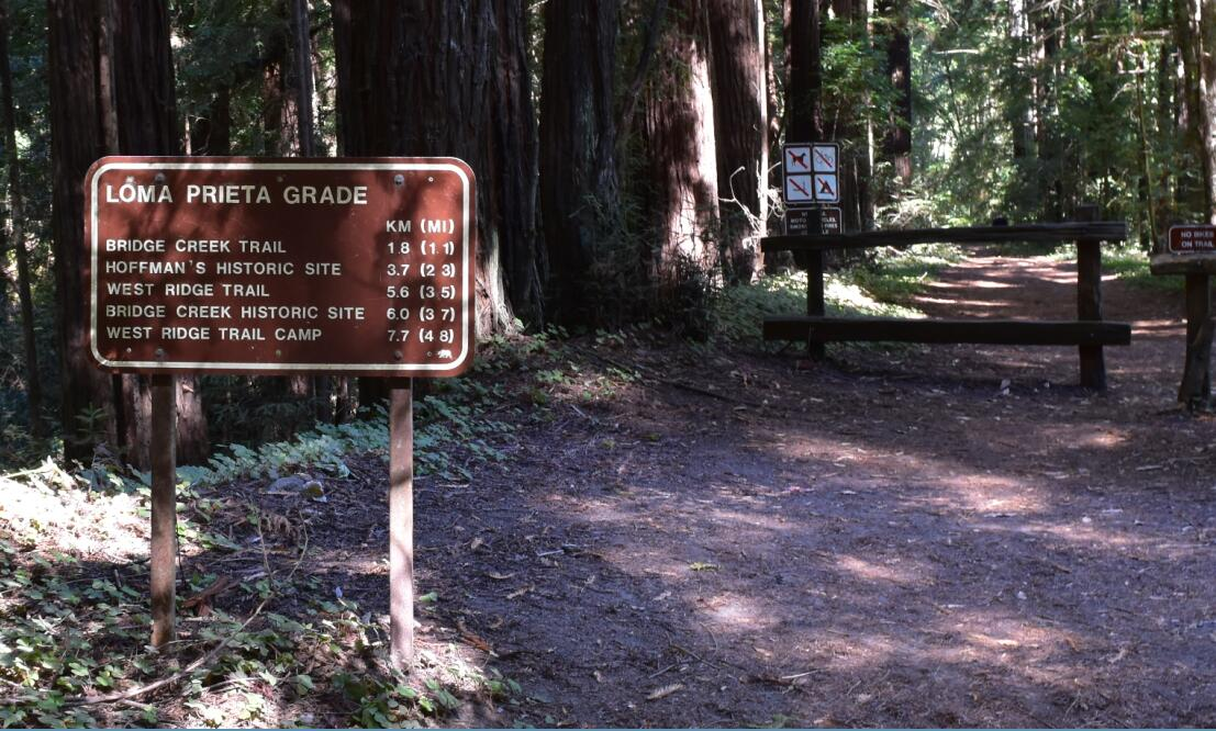 the-forest-of-nisene-marks-state-park8