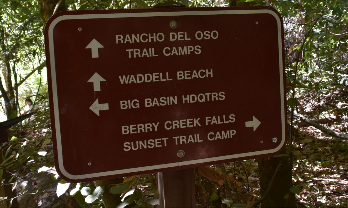 big-basin-stake-park-waddell-beach30