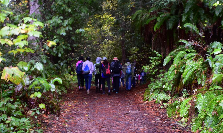 purisima-creek-trail2
