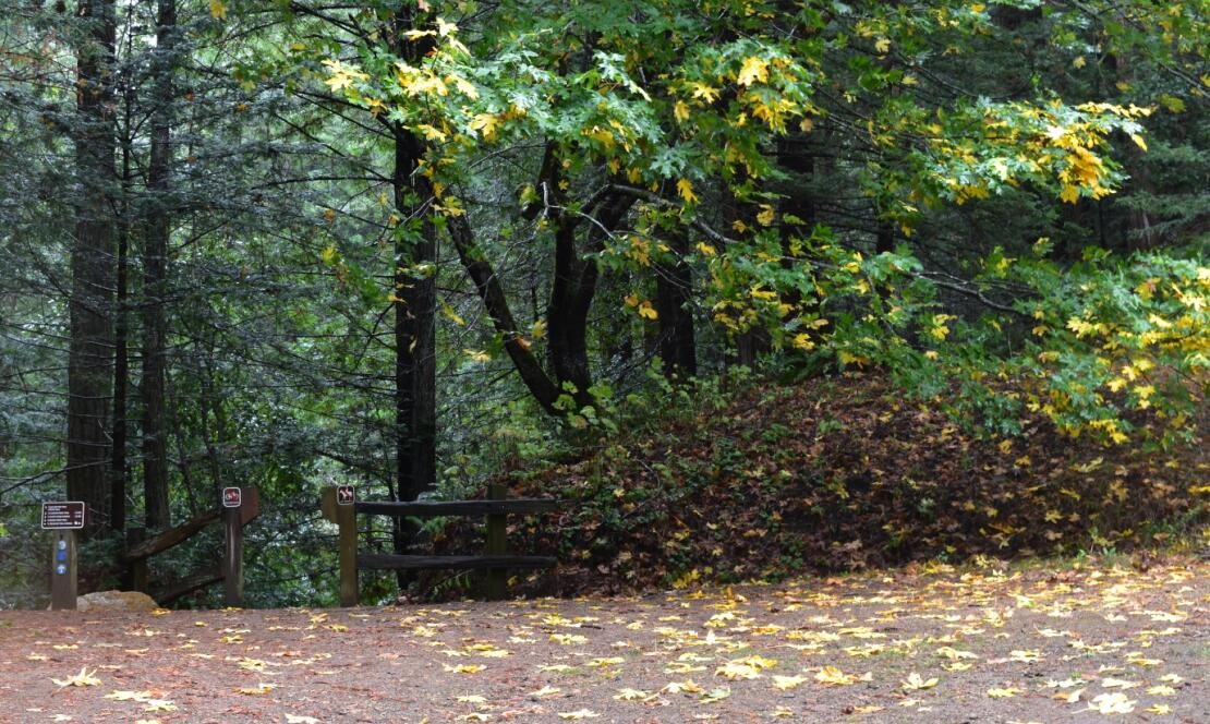 purisima-creek-trail21