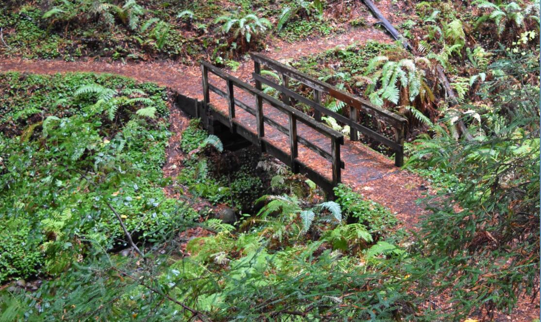purisima-creek-trail23