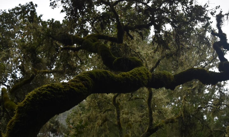 purisima-creek-trail26
