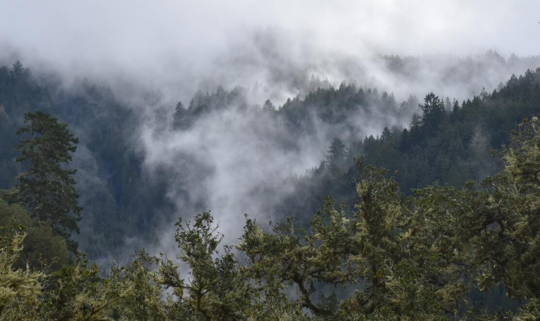 purisima-creek-trail29
