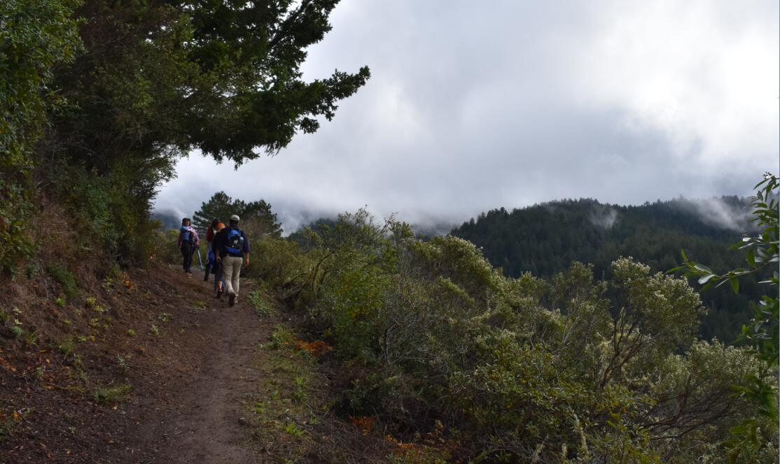 purisima-creek-trail31