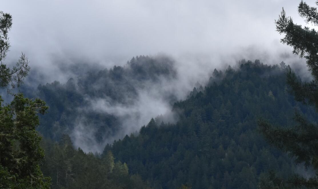 purisima-creek-trail33