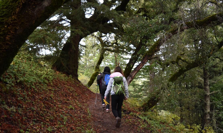 purisima-creek-trail34