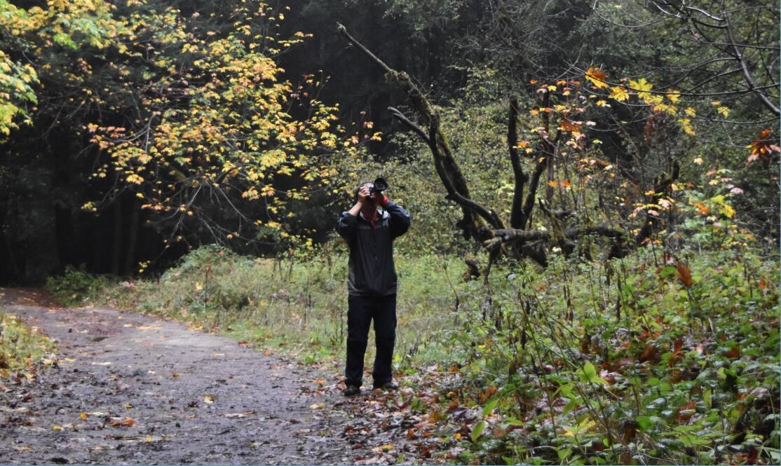 purisima-creek-trail4