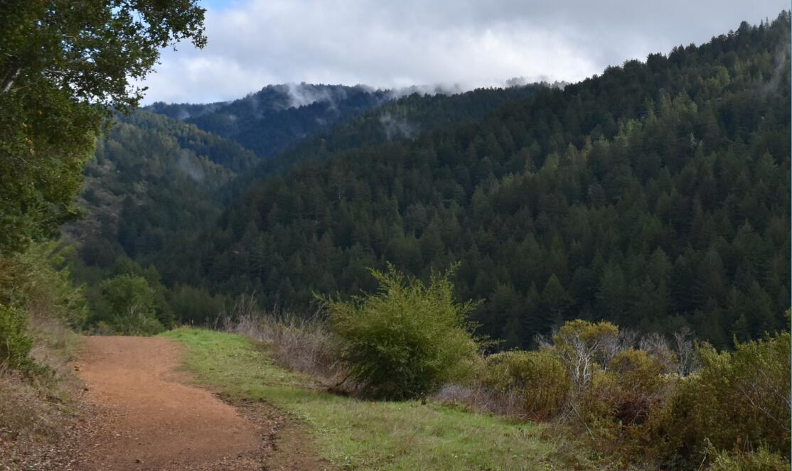 purisima-creek-trail40