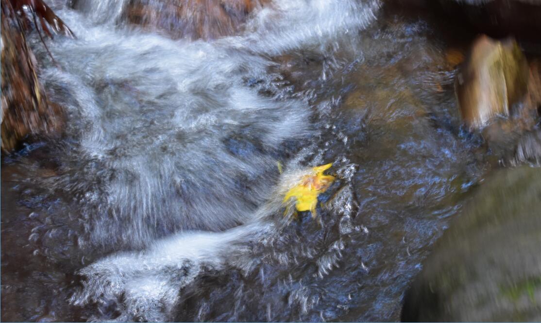 purisima-creek-trail46