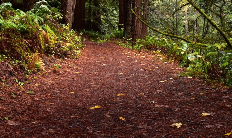 purisima-creek-trail48