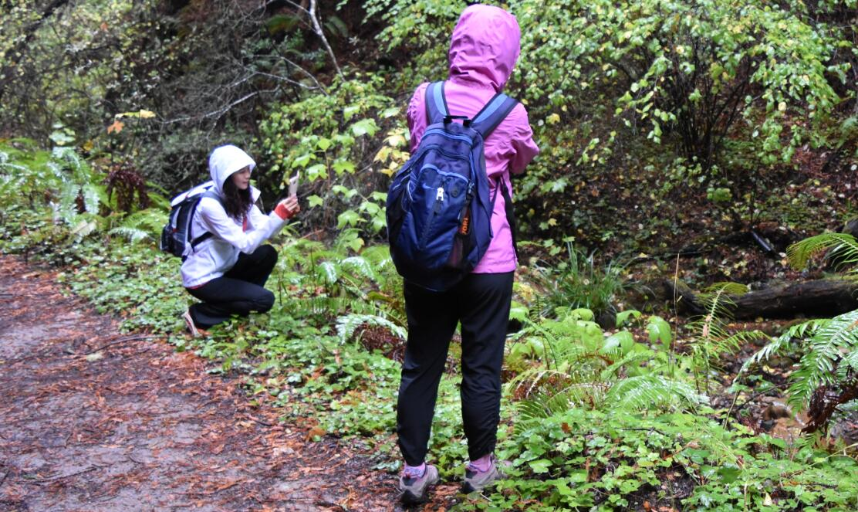purisima-creek-trail5