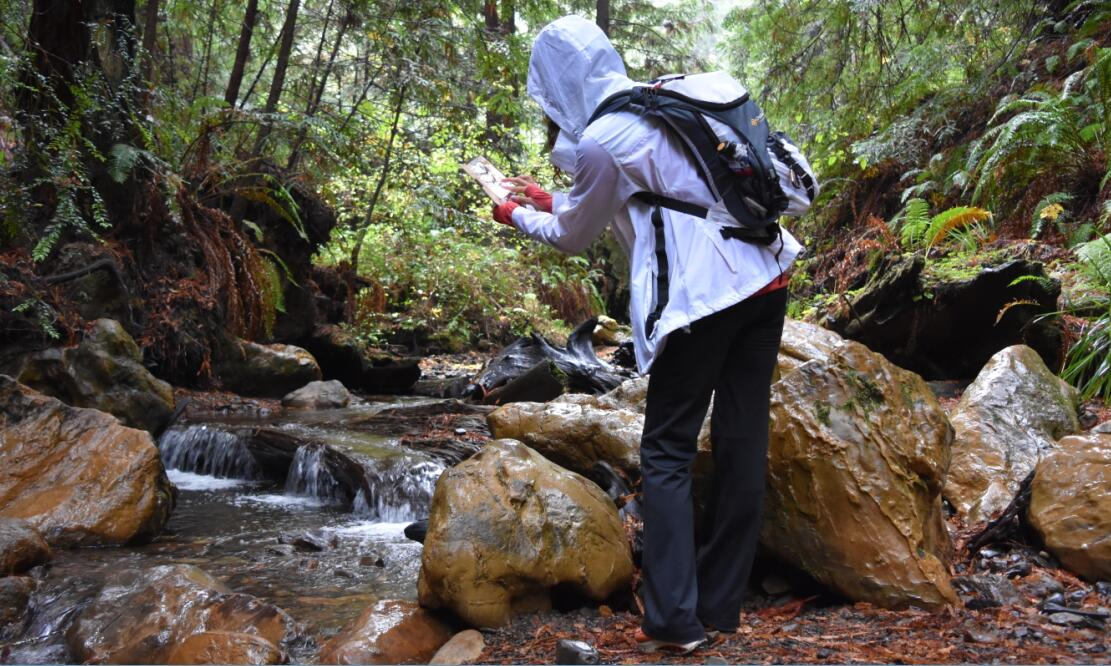 purisima-creek-trail7
