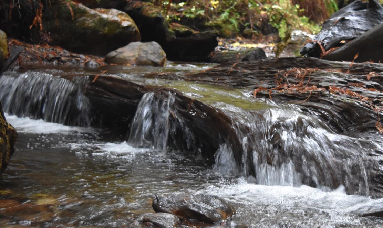 purisima-creek-trail8