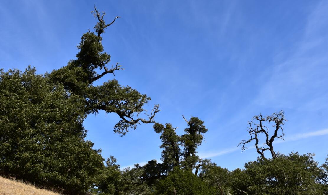 skyline-ridge-open-space-preserve23