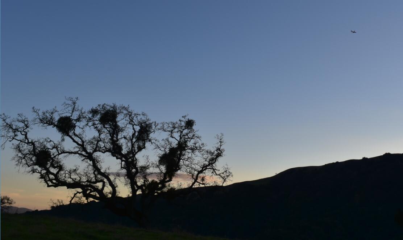 pleasanton-ridge-reginal-park117