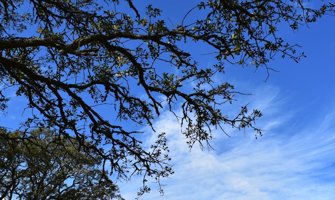 pleasanton-ridge-reginal-park63