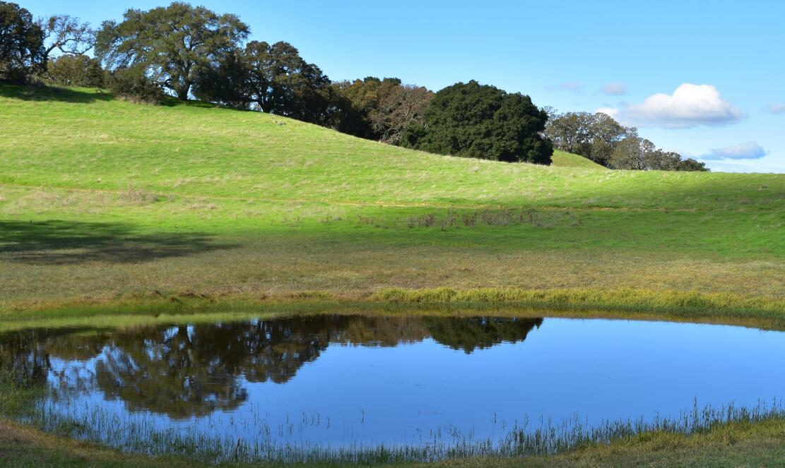 pleasanton-ridge-reginal-park68